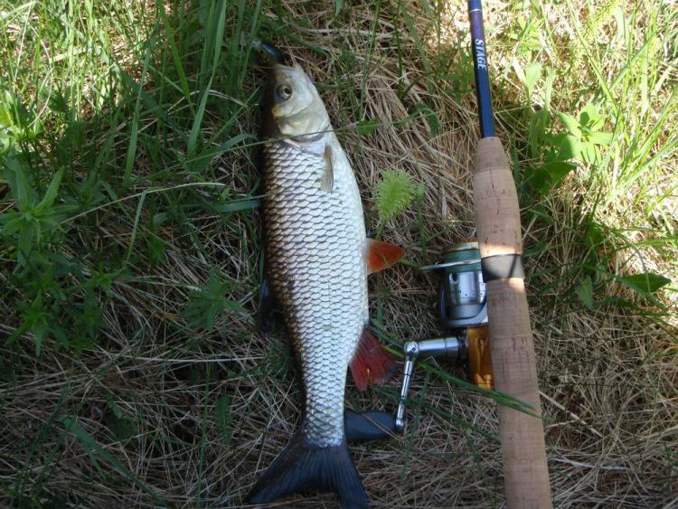 река сиглинка рыбалка