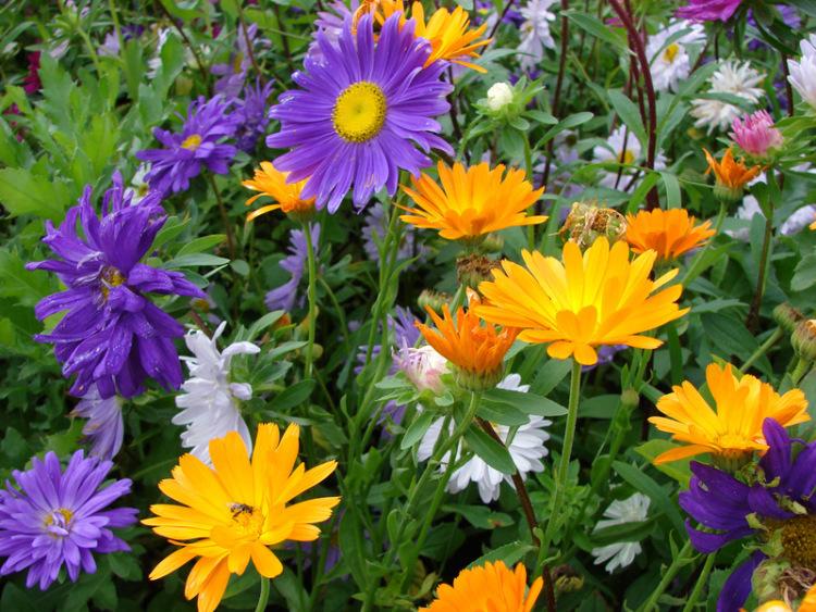 картинки на рабочий стол август цветы № 409670  скачать