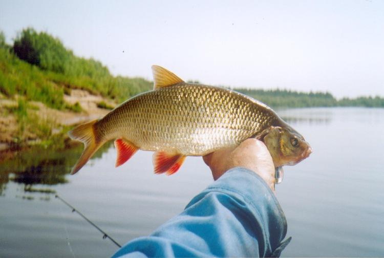 прогноз клева на неделю в городе харьков рыбалка в харькове